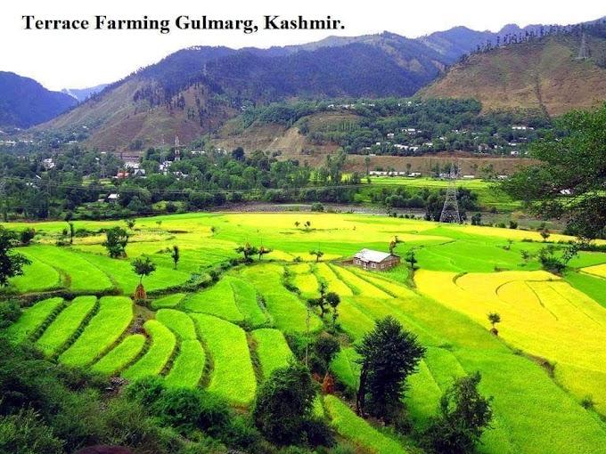 Terrace Farming Gulmarg Kashmir