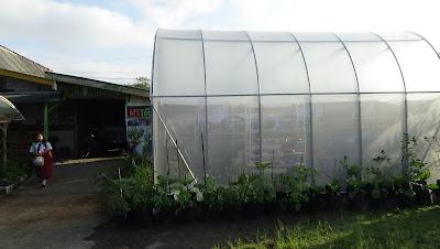 Green House MSTECH.co.id  Konsultasi Pertanian Organik Premium dari Jogja untuk Nusantara