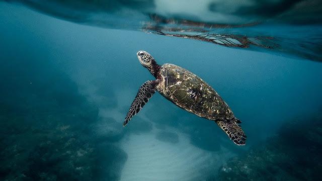 Los científicos advierten de un nuevo peligro 'silencioso' que ya amenaza la vida de los océanos