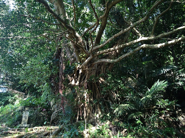 食栄森御嶽の写真