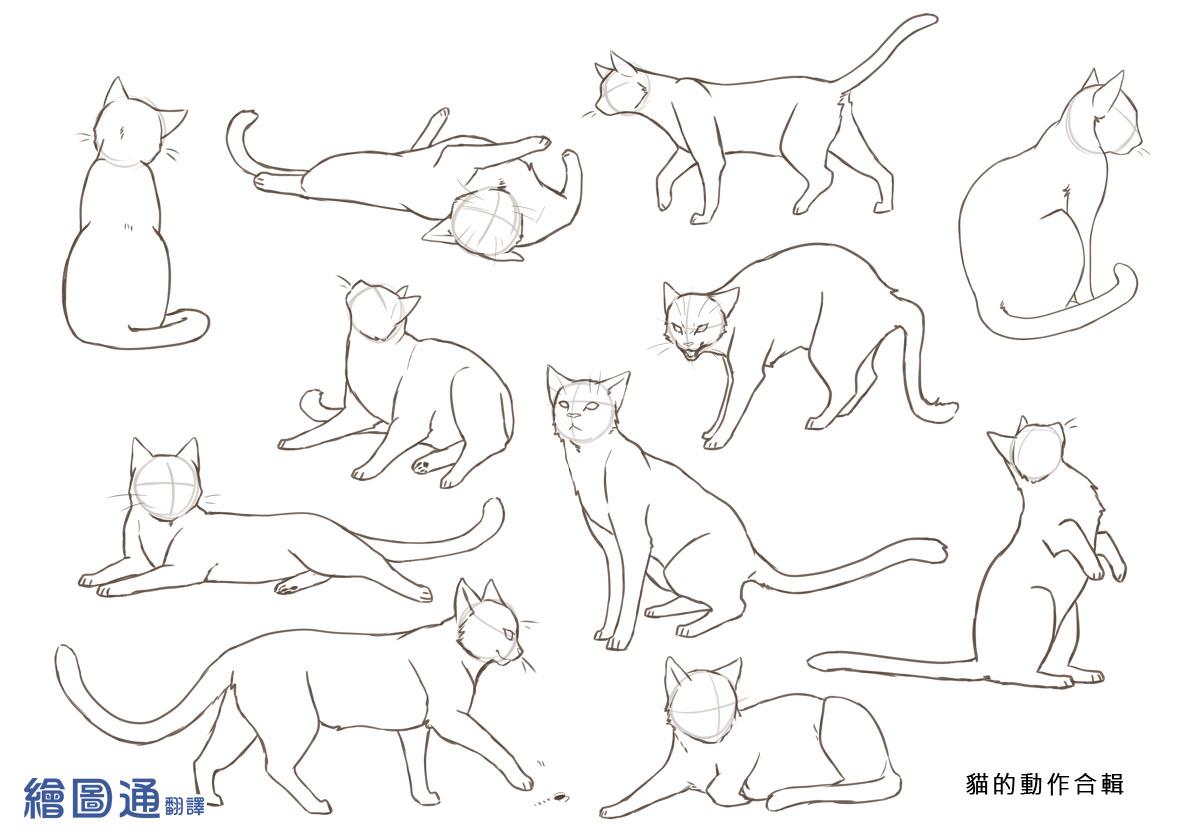 繪圖通: 貓和狗的畫法