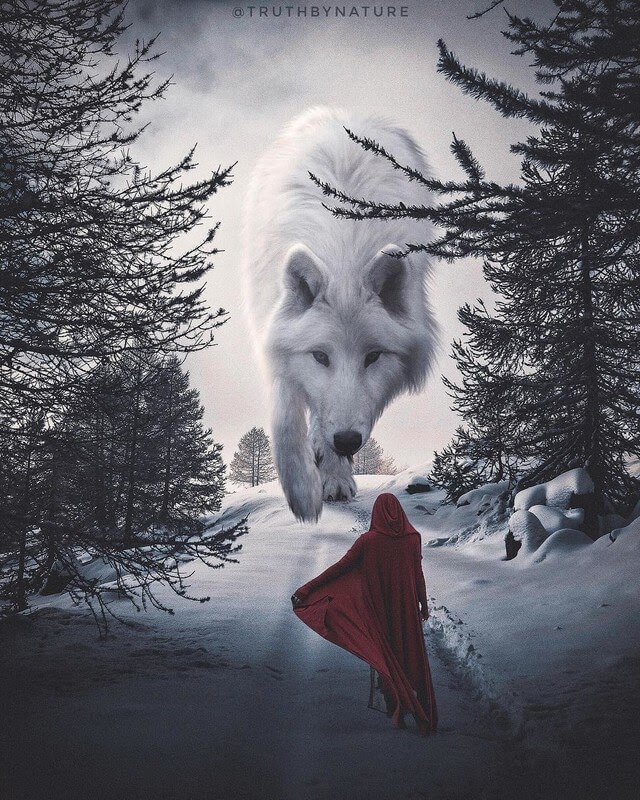 07-Little-Red-Riding-Hood-truthbynature-Surrealism-in-Animal-Photo-Manipulation-www-designstack-co