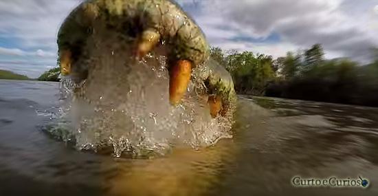 Assustador: o ponto de vista de quem é comido por um crocodilo