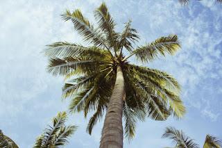 Vue spectaculaire sur un palmier