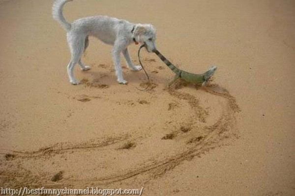 Dog and lizard.