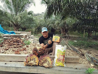 https://agenpupuknasa1.blogspot.com/2017/07/cara-budidaya-kelapa-sawit-dengan-pupuk-nasa.html
