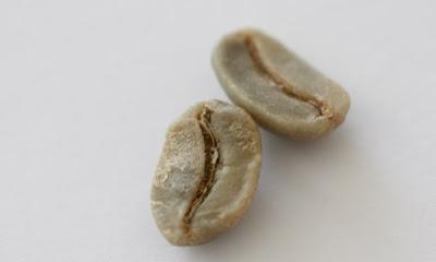 caffè arabica o robusta