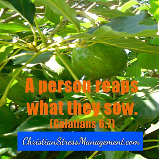A person reaps what they sow Galatians 6:7