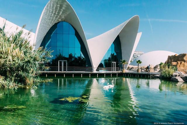 Lago vivo Oceanogràfic Valencia