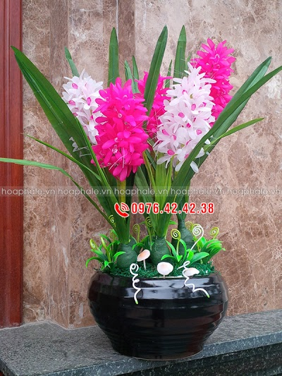 Hoa pha le tai Son Tay