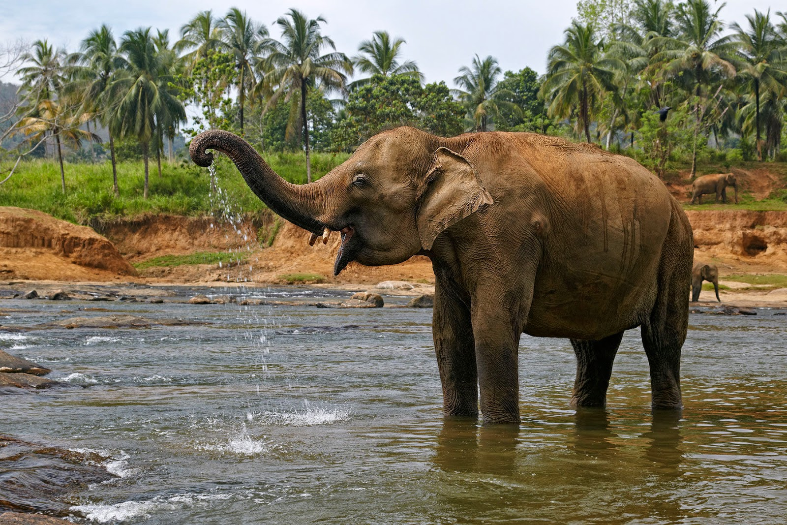 Beautiful Pictures Of Elephant In Hd: Beautiful Elephant Images HD Wallpaper
