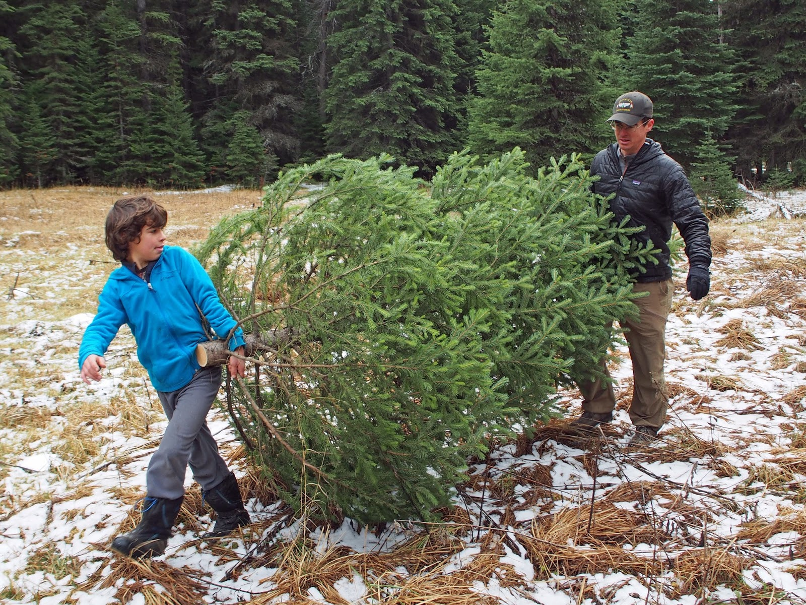 Why you should cut down your own family Christmas Tree