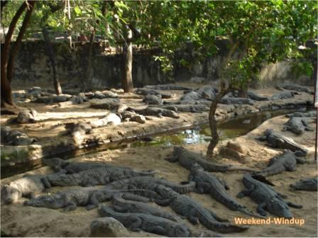 World's largest Crocodile Park