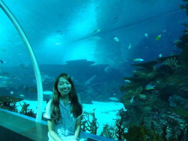 SEA Aquarium Singapore Exhibition