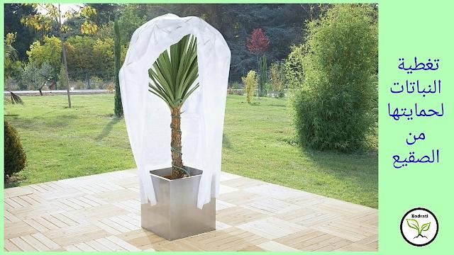 طرق حماية النباتات من الصقيع و نصائح لتجنب موتها أثناء البرد القارس.