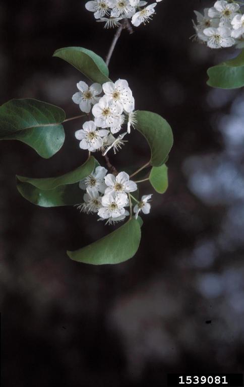 Using Georgia Native Plants White Blooming Roadside Trees