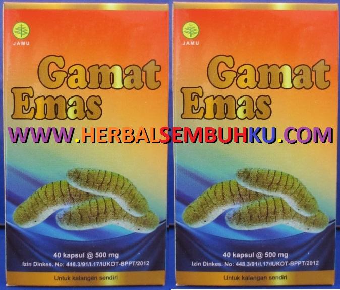 gamat emas kapsul gamat murah surabaya 085755201000