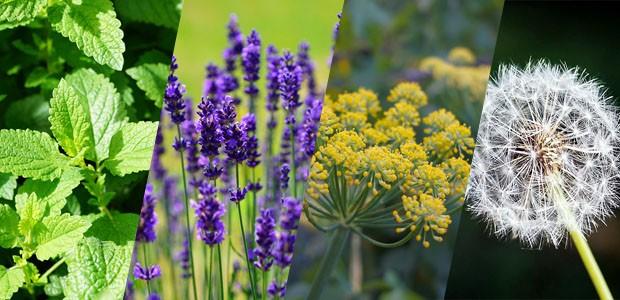 ►... plantas que melhoram a energia da casa...confira as dicas
