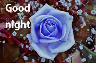 good night moon rose images