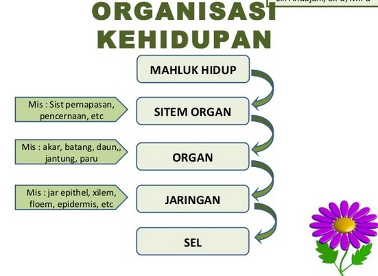 Pengertian Organisme Kehidupan dan Strukturnya
