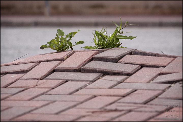 fotografia,naturaleza_urbana,cartagena,planta,arte,serie