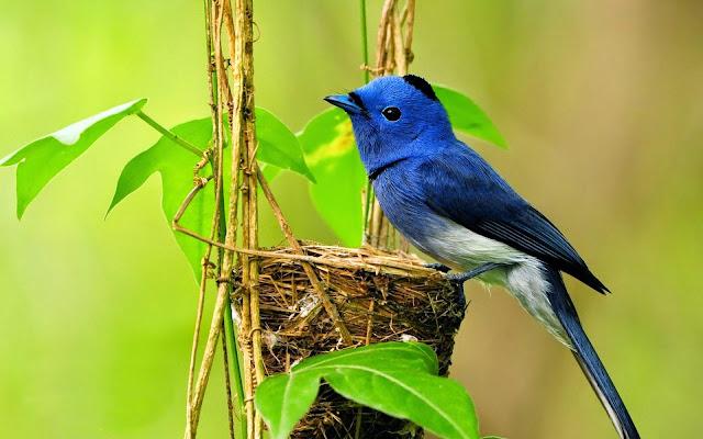 Làm sao để biết chim cảnh bị bệnh