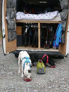Dalmatian and springador eating dog food outside van conversion