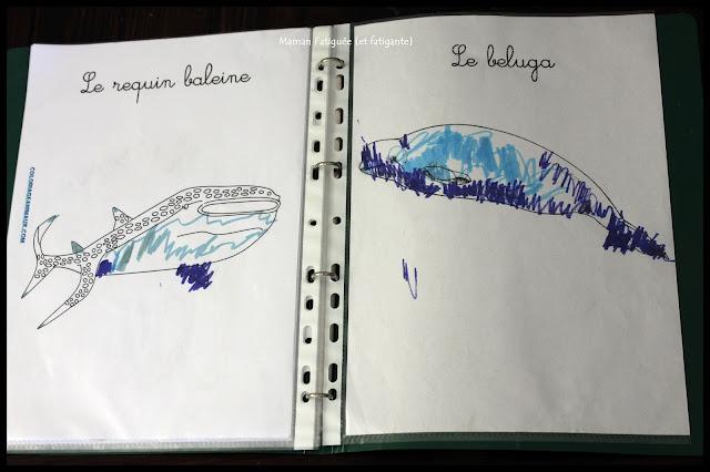 coloriage animaux amerique nord requin baleine beluga