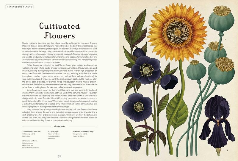 Botanicum. Viaje a través de la botánica con ilustraciones