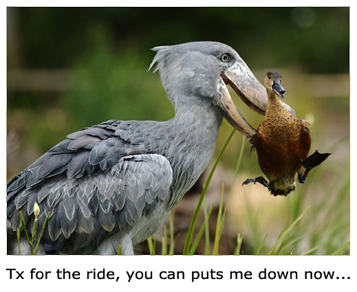 Funny Birds Pictures