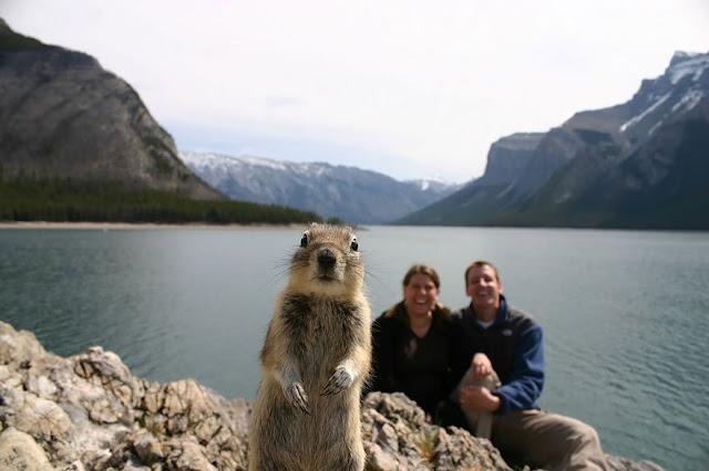 foto lucu saat hewan ikut berselfie bersama manusia-2