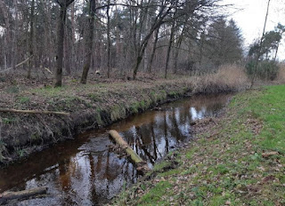 cover Foto Eco-friendly banks (NVOs) and the effects on macroinvertebrates and macrophytes. Bron: Snelle Loop at Milheeze, 12th of February 2020, picture by Dian Oosterhuis