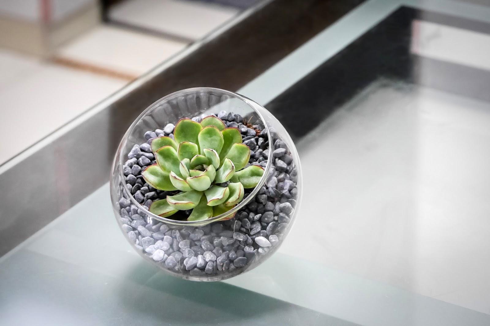Succulent Terrarium From Floral Garage Singapore Javin Tham