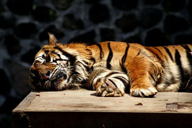 Yuk berkunjung ke kebun binatang bandung