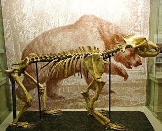 Esqueleto Ursus spelaeus