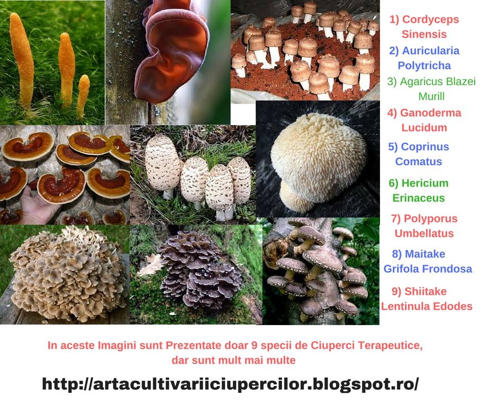 ciuperci medicinale