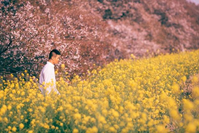 Nhật Bản điểm đến hấp dẫn qua ống kính của nhiếp ảnh gia Việt Nam