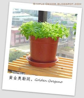 http://simple-decor.blogspot.tw/2015/11/greeny-garden-golden-oregano.html