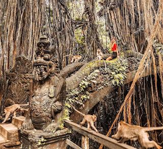 Harga Tiket Masuk Monkey Forest Ubud
