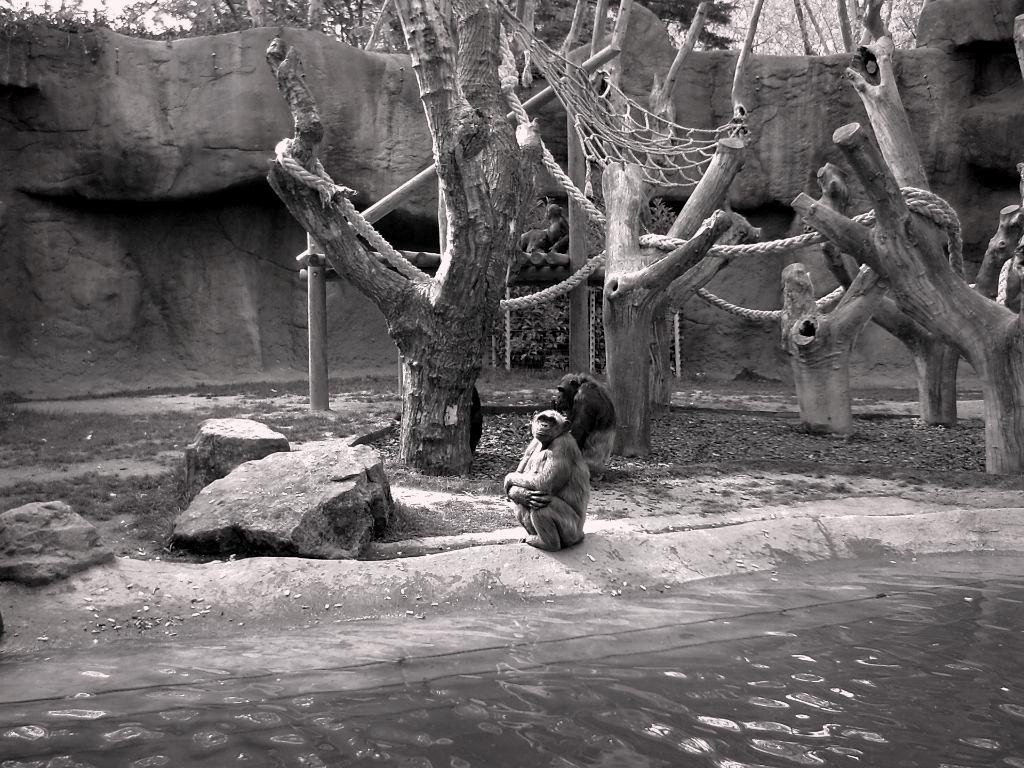 Barcelona Zoo: I Wanna Go Home