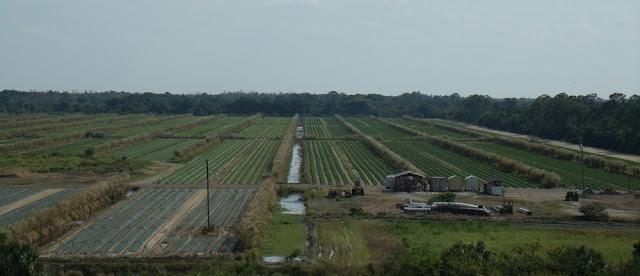 Campos de cultivo junto al St Lucie River Canal