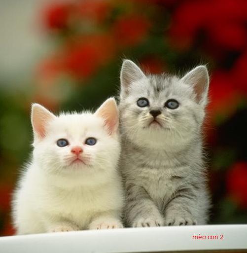 mèo con xinh xắn dễ thương