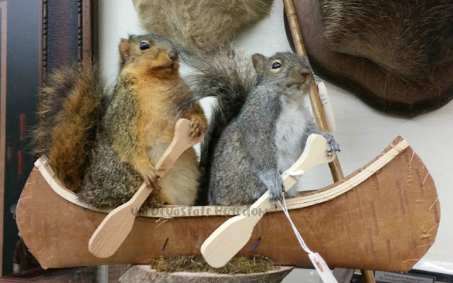 Athletic vintage taxidermy squirrels -- Funny, weird, bizarre, and hilarious -- I've seen lots of crazy things in Dallas TX, and I've got photos to prove it!  Explore a thrift store / antique shop with me, and see all the strange stuff formerly lurking in Texans' closets and attics!  via Devastate Boredom