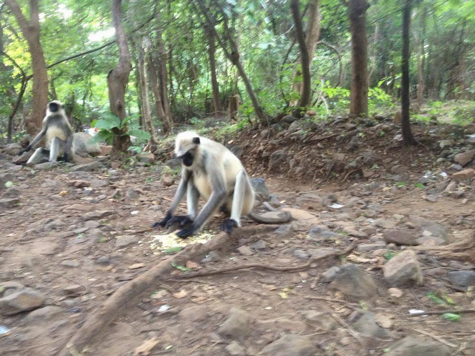 eating monkey wallpaper