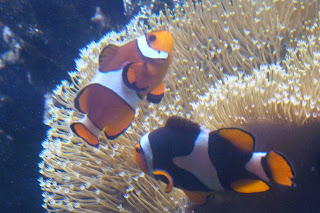 Nemo, Sea Life.