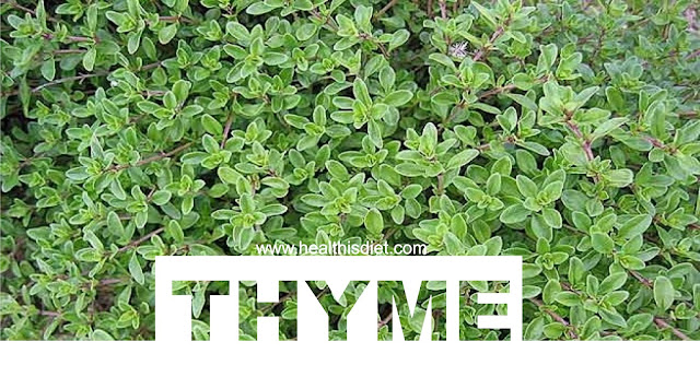 Thyme Herb Benefits