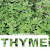 Powerful Thyme Herb Benefits for Your Health, One of Nature's Top Antioxidant Foods