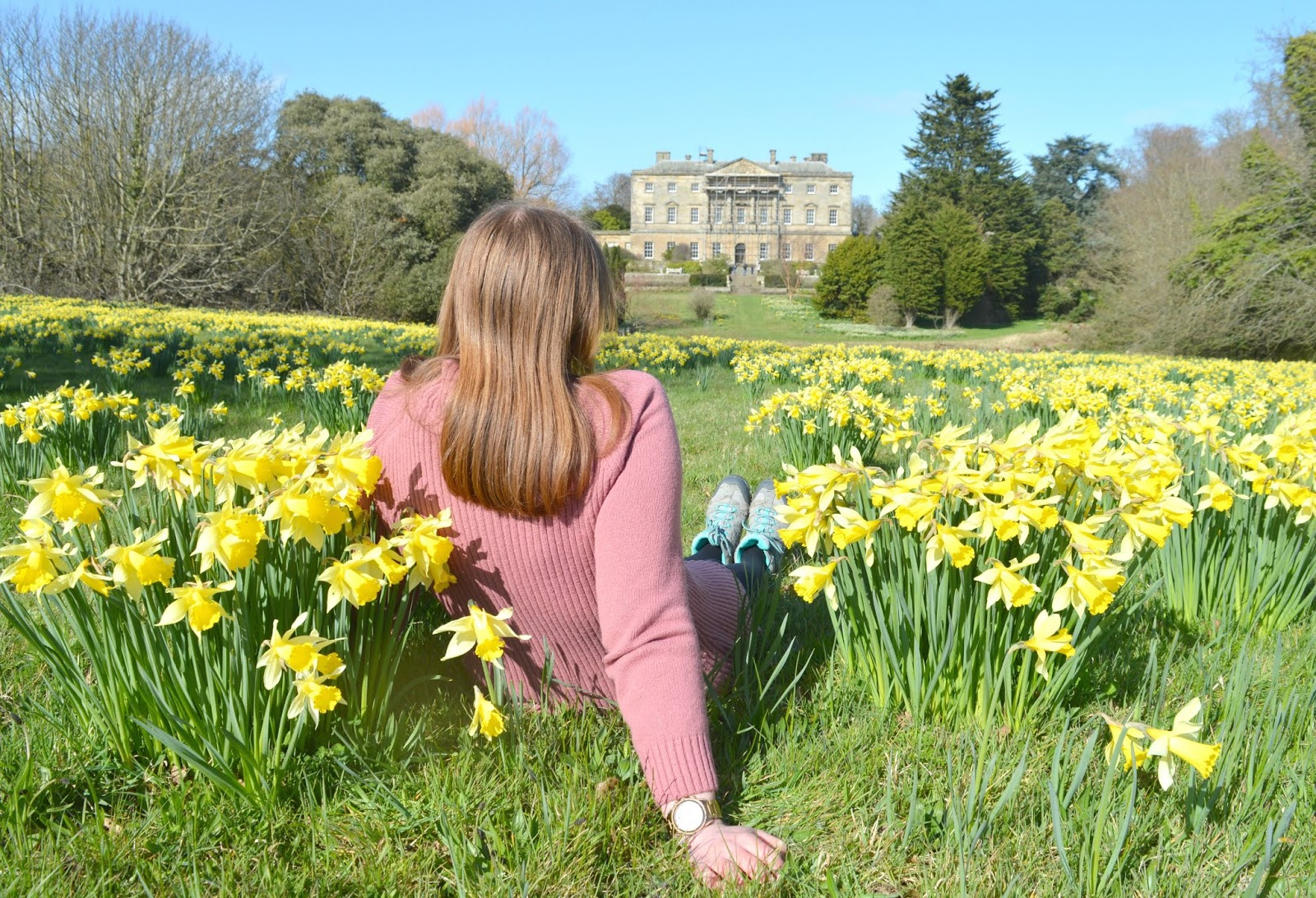 Howick Hall, Northumberland - Daffodil Bank