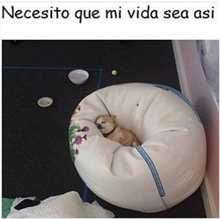 imagenes graciosas en linea perro durmiendo