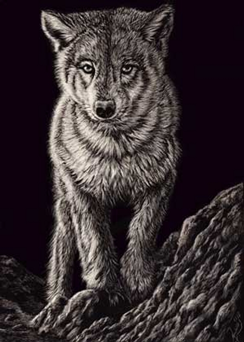 05-Wolf-Pup-Allan-Ace-Adams-Scratchboard-Drawings-of-Wild-Animals-www-designstack-co